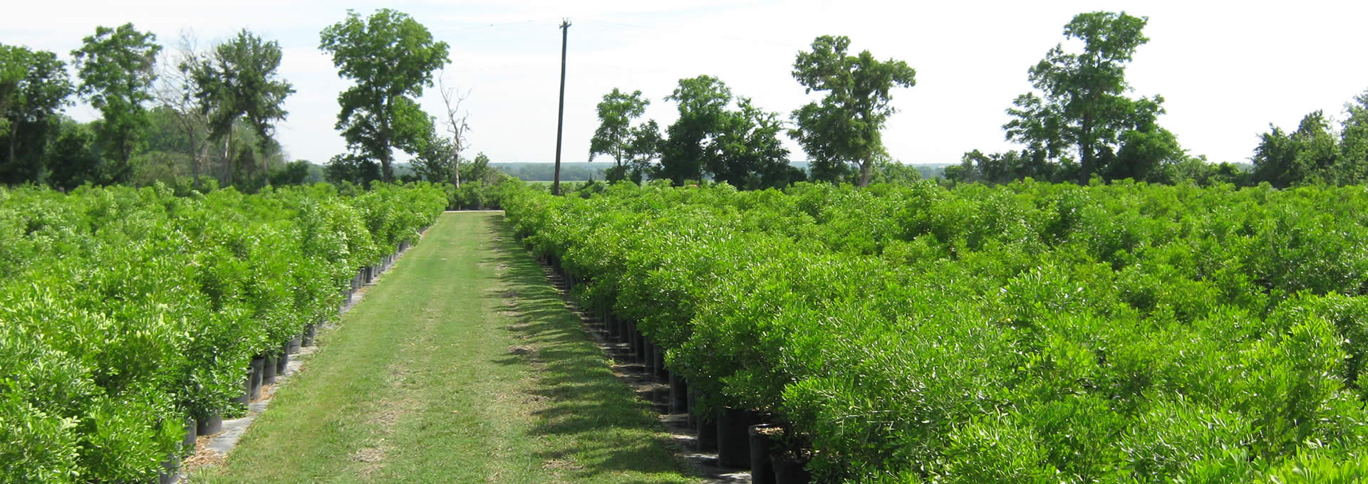 Native Texas Nursery Whole To